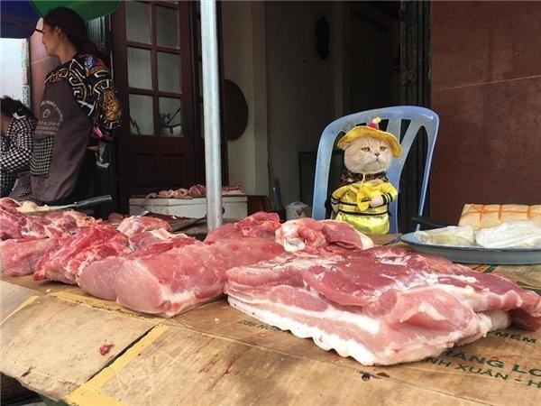 Самый очаровательный продавец рыбы,который покорит ваше сердце (12 фото)