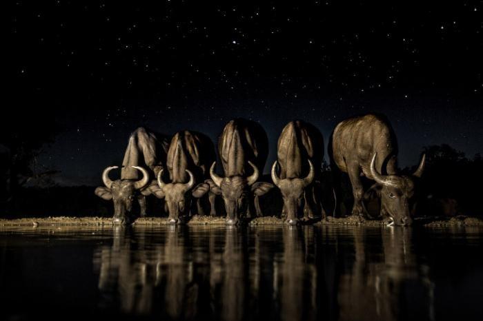 Мир животных (21 фото)