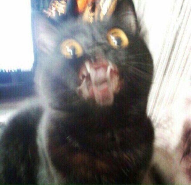 Кошки не любят фотографироваться (10 фото)