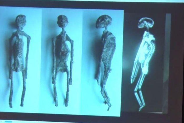 В Перу найдены скелеты пришельцев (8 фото)