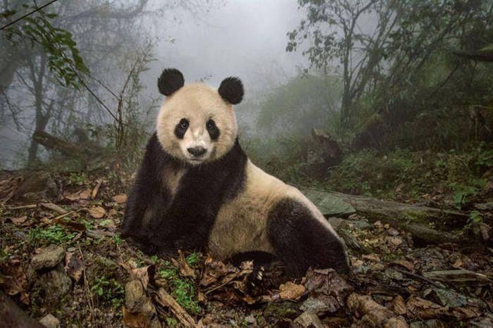 Лучшие снимки из National Geographic за 2016 год (43 фото)