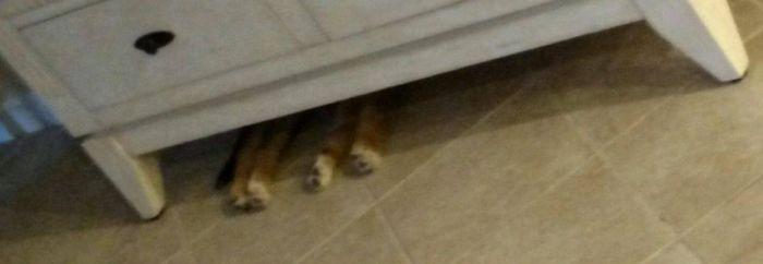 Собака не изменяет своим привычкам (3 фото)