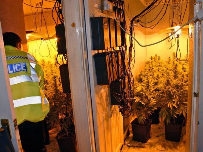 Соседи унюхали ферму по выращиванию марихуаны (9 фото)
