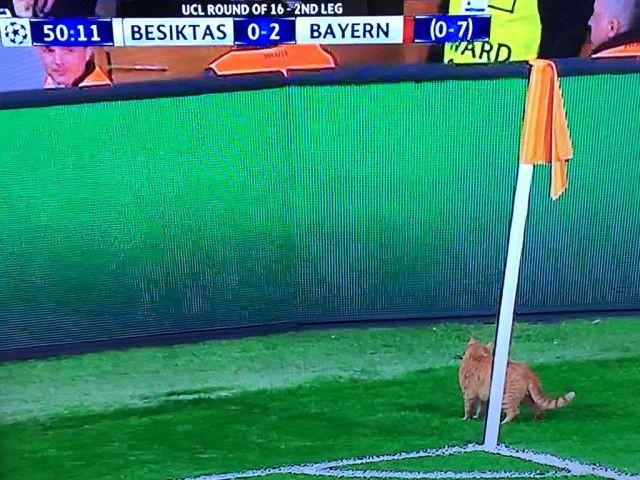 УЕФА открыло дело против турецкого «Бешикташа». Виновник – кот (4 фото)