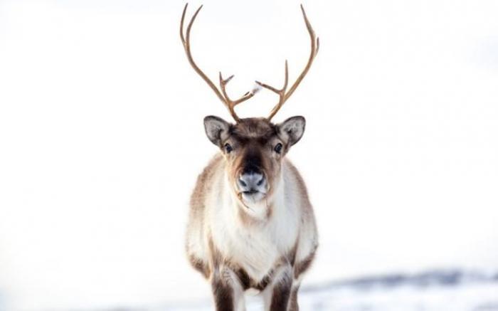 Животные в фотографиях (18 фото)