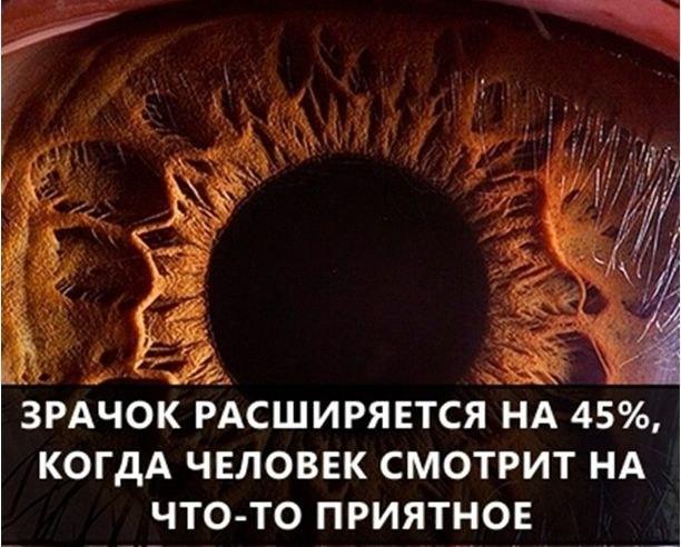 О самых интересных фактах в мире (55 фото)