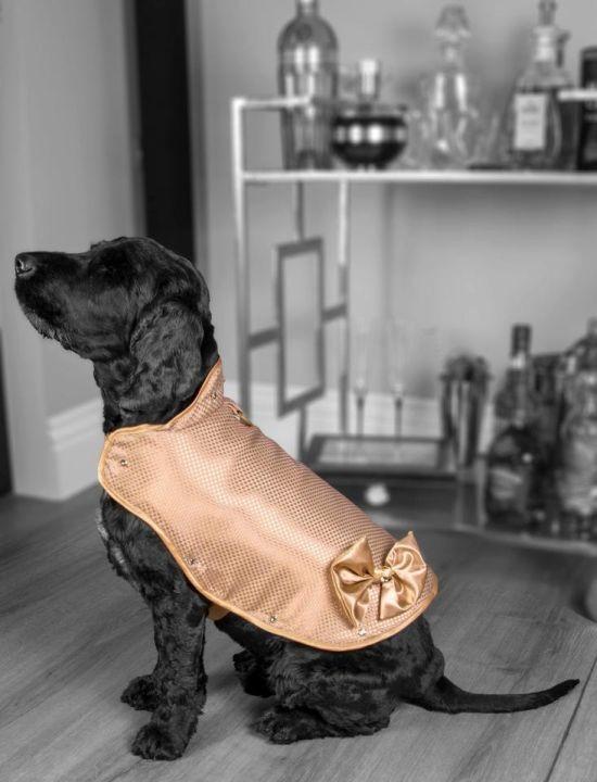 Собачий жилет стоимостью 1,4 миллиона долларов (3 фото)