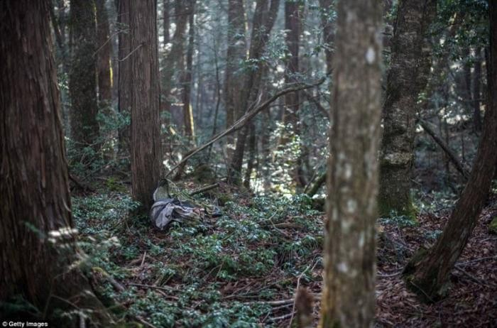 Мрачный японский лес для самоубийц (18 фото)