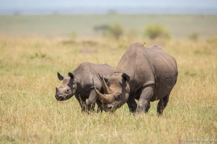 Великаны Африки (19 фото)