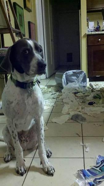 Пушистые проказники разрушают жилище человека (32 фото)