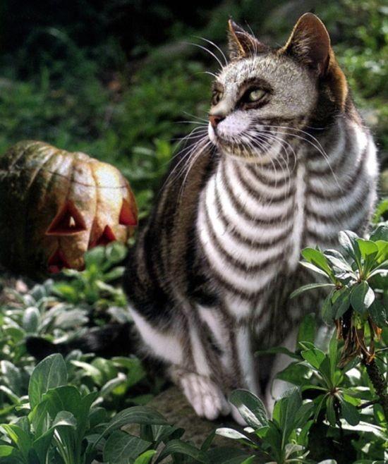Образ на Хэллоуин для вашего пушистого друга (41 фото)