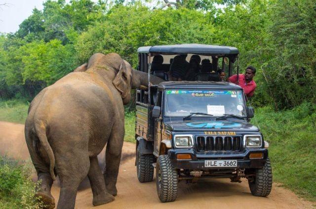 В Шри-Ланке слон едва не испортил туристам сафари (5 фото)