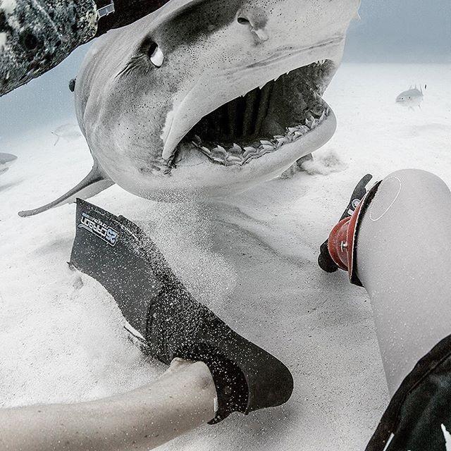 Серфер, лишившийся ноги из-за акулы, стал защитником этих хищниц (13 фото)