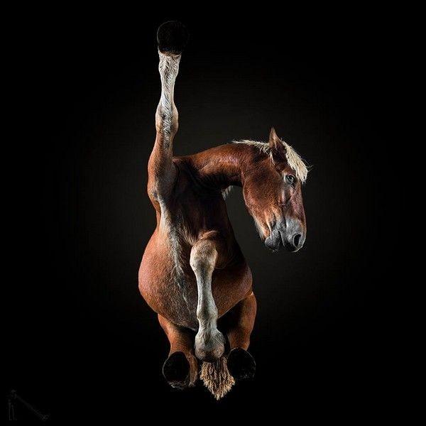 То осталось за кадром потрясающих фото с лошадьми (14 фото)