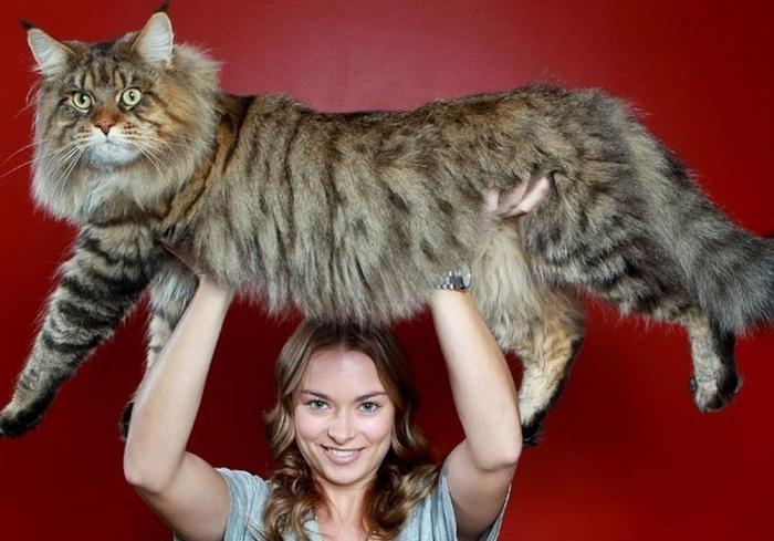 Фото самых больших животных (23 фото)