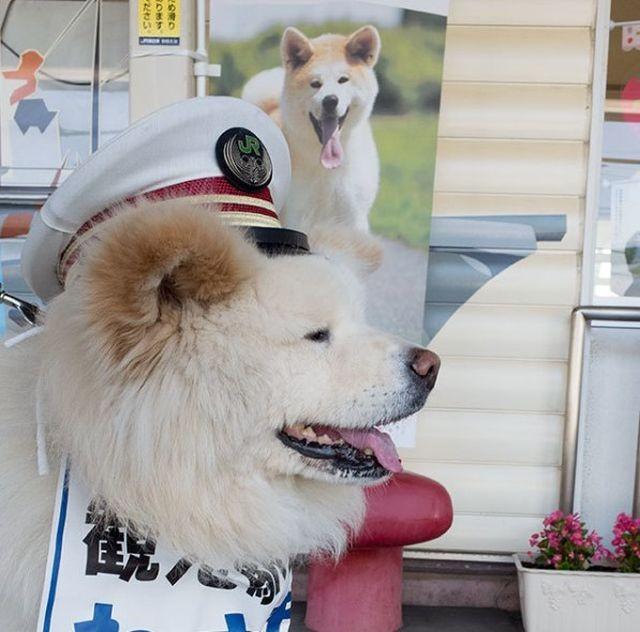 Бездомный пес стал начальником железнодорожного вокзала (4 фото)