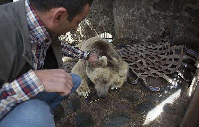 В Армении спасли медведицу, прожившую всю жизнь в клетке (8 фото)