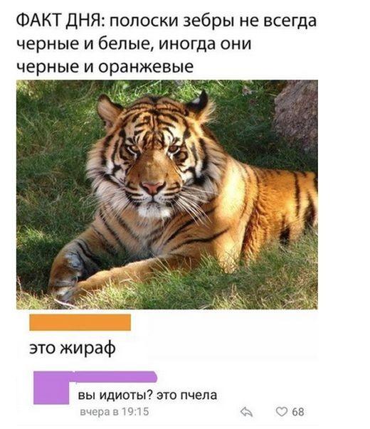 Подборка прикольных фотографий (46 фото)