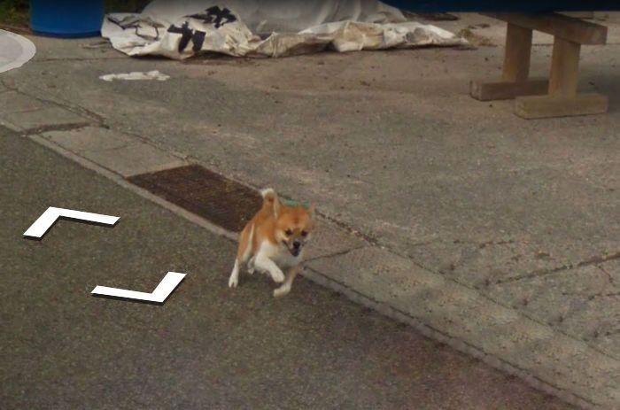 Пес погнался за машиной Google Street View и попал в кадр (8 фото)