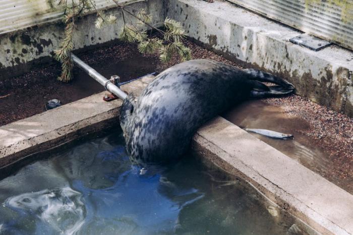 Собратья: особые отношения финнов с животными (14 фото)