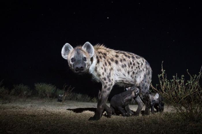 Лучшие фотографии животных (18 фото)