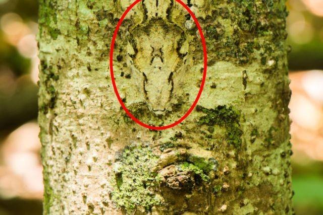 Замаскировавшиеся животные (28 фото)