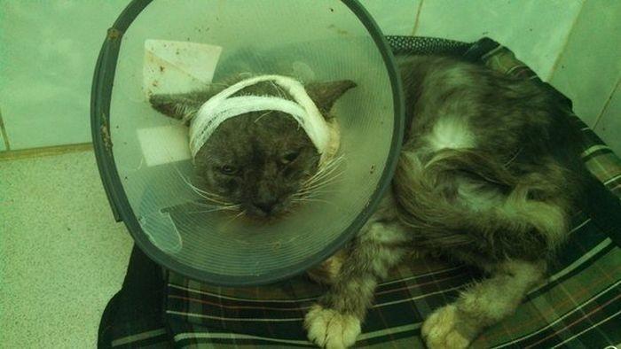 Преображение кота (7 фото)