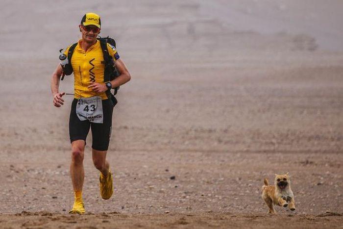 Стокилометровая пробежка с собакой (4 фото)