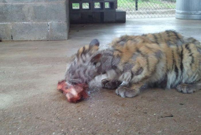 Животное находилось на волоске от гибели (8 фото)