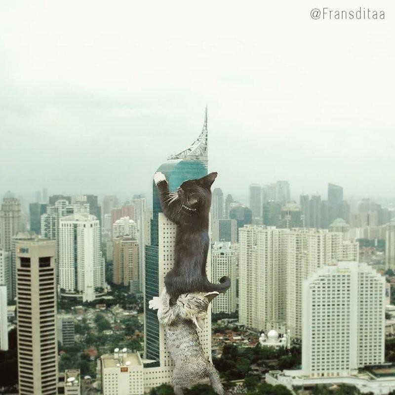 Гигантские кошки в городских ландшафтах (24 фото)