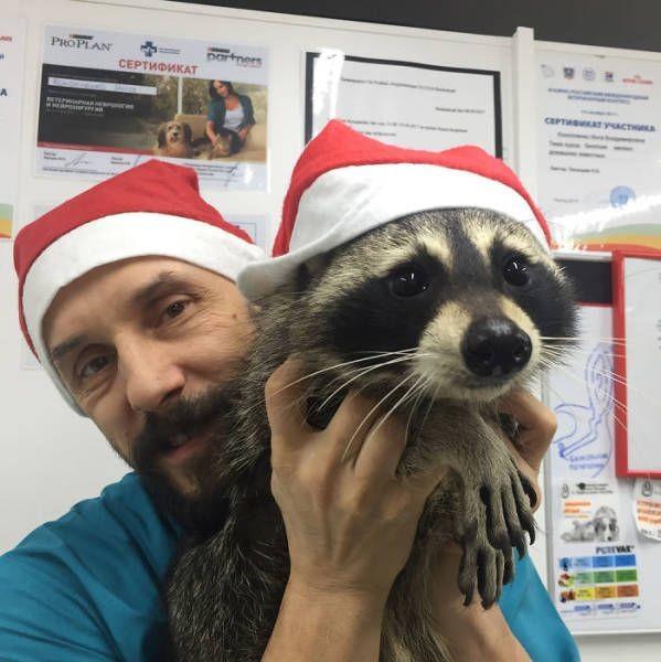 Енот-ветеринар из клиники Ростова-на-Дону (8 фото)