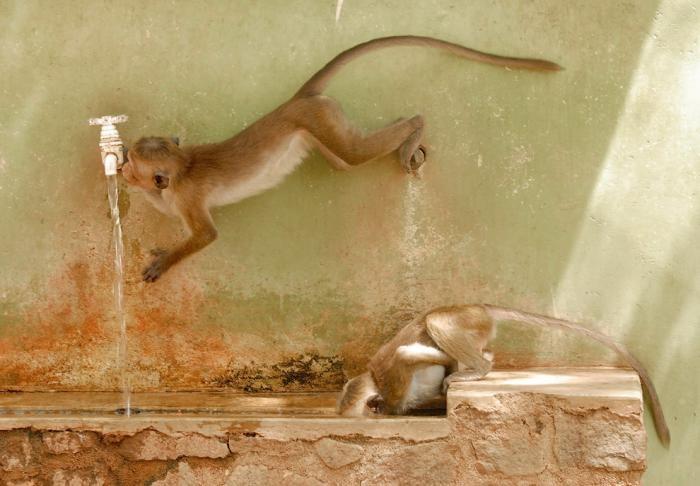 Конкурс фотографий животных от лондонского зоопарка (12 фото)