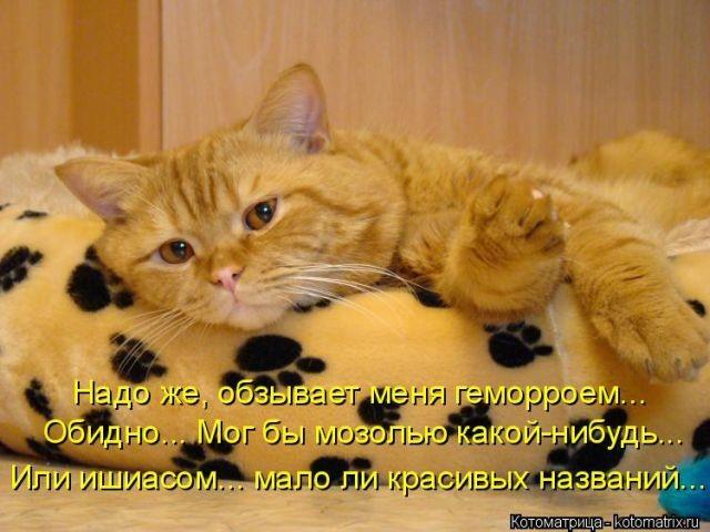 Лучшие приколы с котами (50 фото)