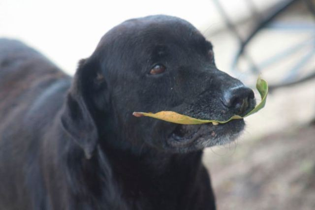 Умный пес понял суть товарно-денежных отношений (8 фото)
