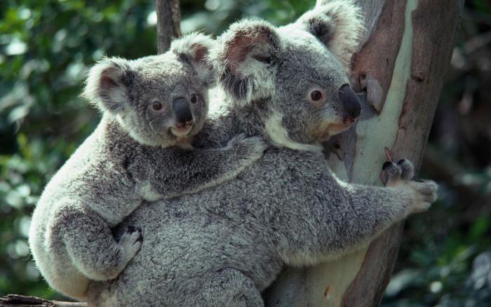 Самые медленные животные в мире (10 фото)