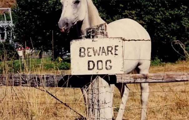 «Злые собаки», которых хочется немедленно погладить (32 фото)