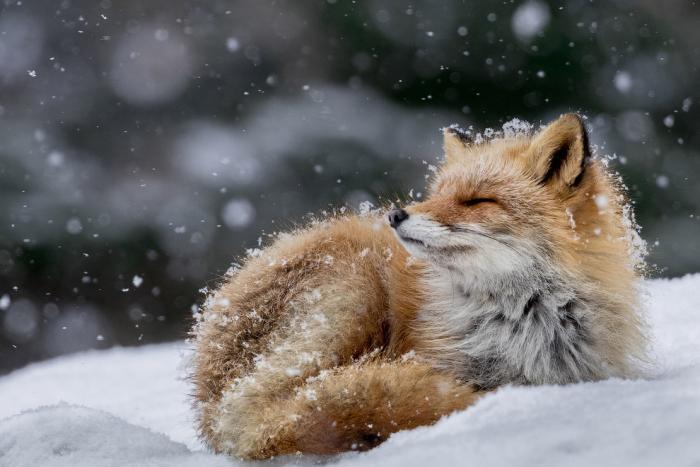 0a9d61 National Geographic: лучший фотограф природы года (23 фото)