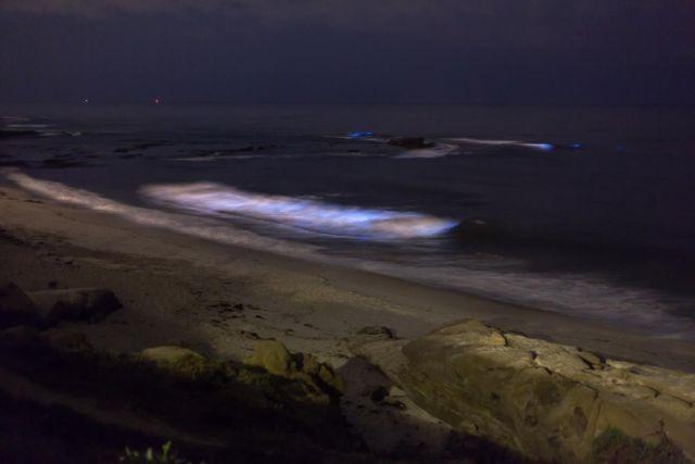 49f7e9 В Калифорнии океан стал светиться голубым цветом (8 фото)