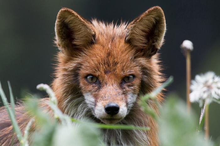 4c8416 National Geographic: лучший фотограф природы года (23 фото)