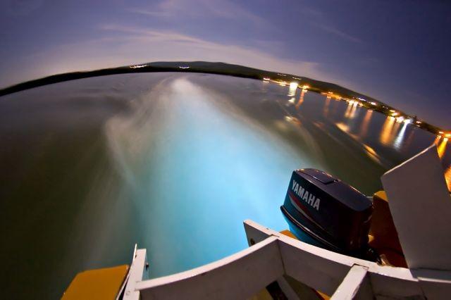 6c3986 В Калифорнии океан стал светиться голубым цветом (8 фото)