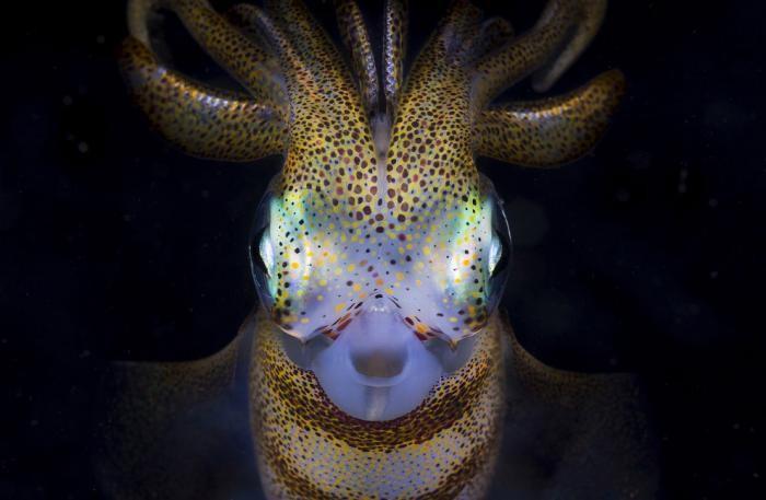 7a2a8e National Geographic: лучший фотограф природы года (23 фото)