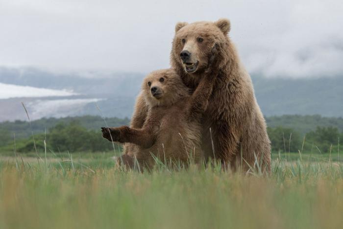 National Geographic: лучший фотограф природы года (23 фото)