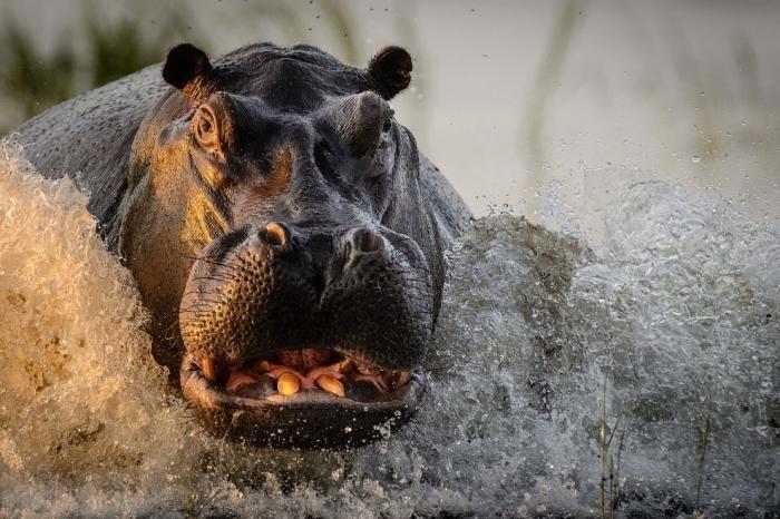 7f89b5 National Geographic: лучший фотограф природы года (23 фото)