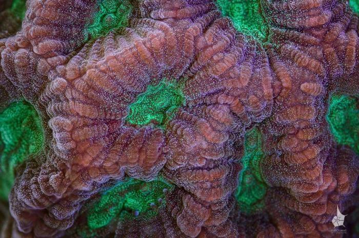 Кораллы Большого Барьерного рифа (20 фото)