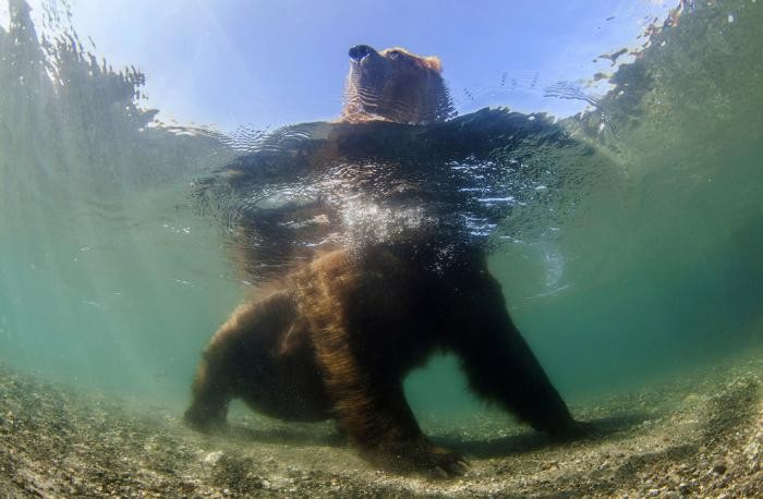 90dbc6 National Geographic: лучший фотограф природы года (23 фото)