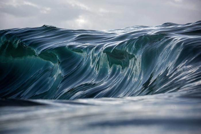 aaf00a National Geographic: лучший фотограф природы года (23 фото)