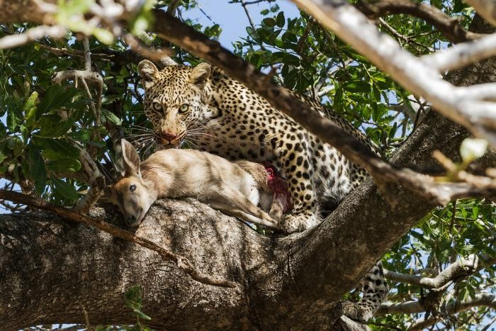 ab5086 National Geographic: лучший фотограф природы года (23 фото)