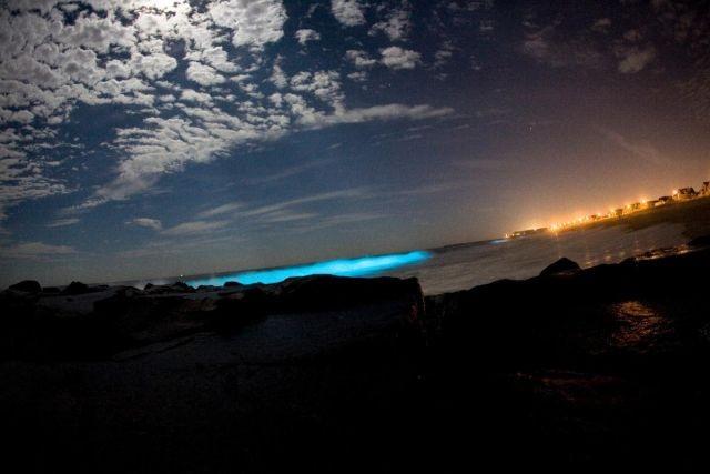c7a9f8 В Калифорнии океан стал светиться голубым цветом (8 фото)