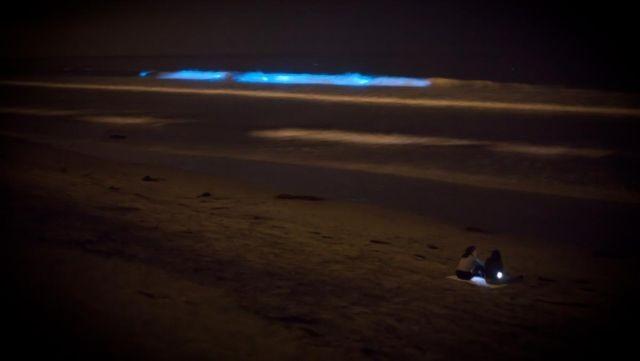 f225b4 В Калифорнии океан стал светиться голубым цветом (8 фото)