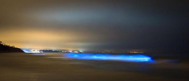 f37b14 В Калифорнии океан стал светиться голубым цветом (8 фото)